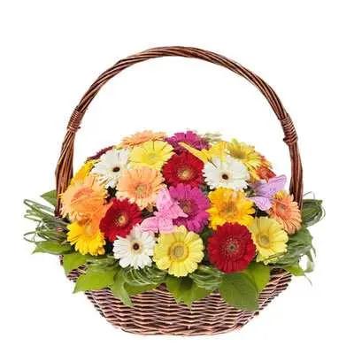 Mixed Gerbera Basket